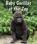 Baby Gorillas at the Zoo cf002159-d01a-4b0d-906e-4c0475eb128d