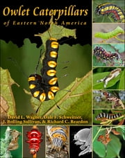 Owlet Caterpillars of Eastern North America ebook by David L. Wagner,Dale F. Schweitzer,J. Bolling Sullivan,Richard C. Reardon