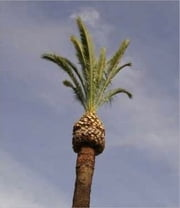 How to Trim a Palm Tree ebook by Errol Flynn