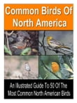 50 Common Birds of North America
