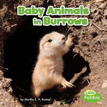 Baby Animals in Burrows audiobook by Martha Rustad