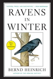 Ravens in Winter ebook by Bernd Heinrich