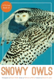 A Picture Book of Snowy Owls ebook by Bryan Shane,Patricia Lafferty