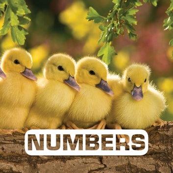 Numbers ebook by Judith Nouvion