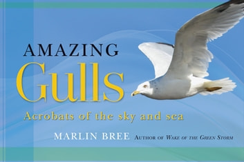 Amazing Gulls - Acrobats of the Sky and Sea ebook by Marlin Bree