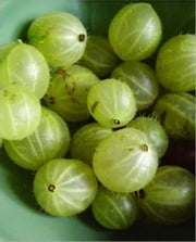A Crash Course on How to Grow Gooseberries ebook by Carmen Casey