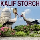 Kalif Storch audiobook by Wilhelm Hauff, Manfred Zazzi