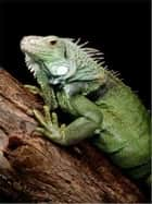 The Essential Guide to Caring For Your Pet Iguana ebook by Melvin Hoffman
