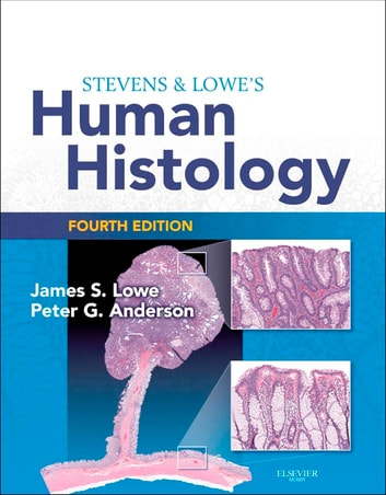 Stevens lowes human histology e book ebook by james s lowe stevens lowes human histology e book with student consult online access ebook by fandeluxe Choice Image