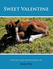 Sweet Valentine ebook by Shelly Willis