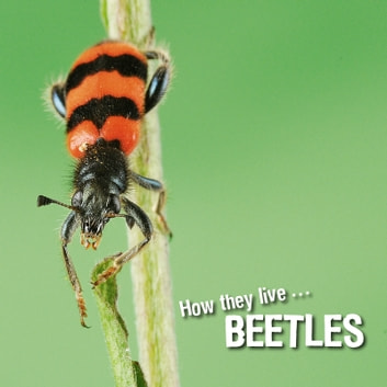 How they live... Beetles - Learn All There Is to Know About These Animals! ebook by David Withrington,Ivan Esenko