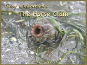 Today I Discovered The Horse Clam ebook by Heather Stannard,Lynn Stannard