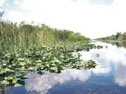Florida's Everglades National Park ebook by Morris Bruce