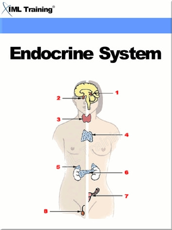 Endocrine System (Human Body) - Includes Anatomy, Physiology, Diseases, Disorders, and Diabetes Mellitus ebook by