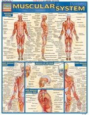 Muscular System ebook by BarCharts,Inc
