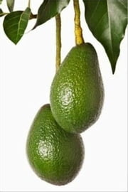 How to Grow Avocado Trees ebook by Cubby Barnes
