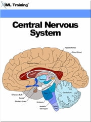Central Nervous System (Human Body) - Includes Anatomy, Physiology, Nervous System, Physical Assessment, Diseases, Disorders, Seizures, Trauma, Head, Spinal Cord, Injury, Immobilization Techniques and Management ebook by