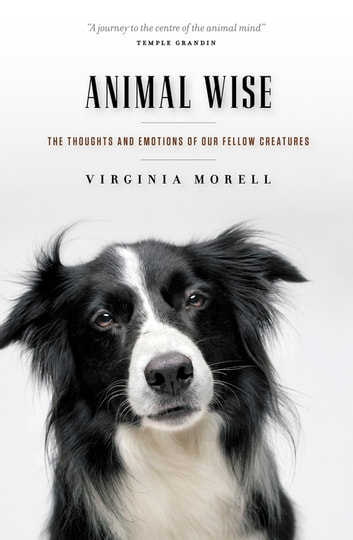 Animal Wise - The Thoughts and Emotions of Our Fellow Creatures ebook by Virginia Morell