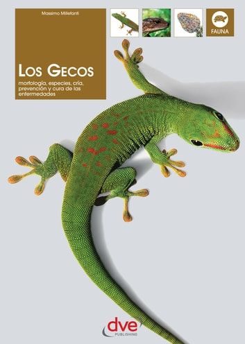 Los gecos ebook by Massimo Millefanti