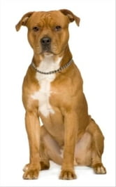 A Beginners Guide to American Staffordshire Terriers ebook by Harry Roosevelt