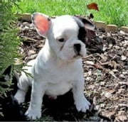 The Essential Guide to Owning and Raising French Bulldogs ebook by Nicolas Balthazar