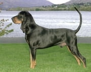 Black and Tan Coonhounds for Beginners ebook by Tom Paunovic