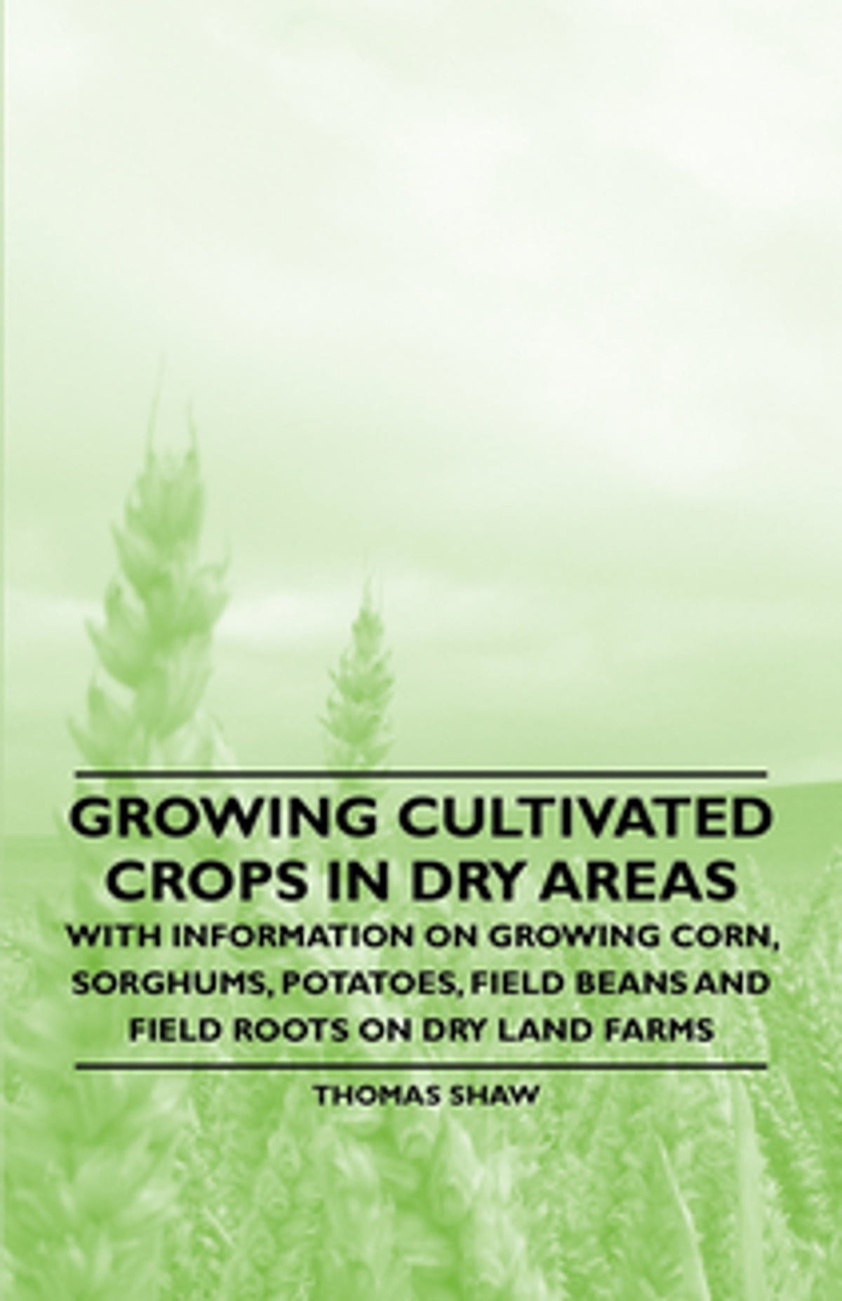 Information On Growing Okra And Harvesting Okra: Growing Cultivated Crops In Dry Areas