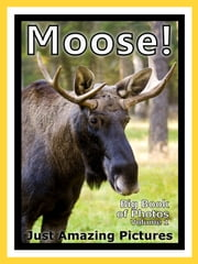 Just Moose & Elk Photos! Big Book of Photographs & Pictures of Moose & Elk, Vol. 1 ebook by Big Book of Photos