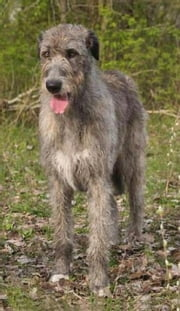 Irish Wolfhounds for Beginners ebook by Marty Klein