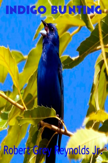 Indigo Bunting ebook by Robert Grey Reynolds Jr