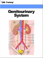 Genitourinary System (Human Body) - Includes Anatomy, Physiology, Physical Assessment, Urinary System, Diseases, Disorders, Catheterization, Kidney, Bladder, Organs, Drug, Therapy, Aging, Male, Female Genitalia, Sexually Transmitted Diseases, Laboratory Procedures, and Diuretics ebook by IML Training