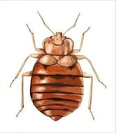 How to Get Rid of Bed Bugs ebook by Mike Enslin