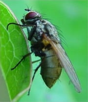 A Crash Course on How to Get Rid of House Flies ebook by Jaime Gonzalez