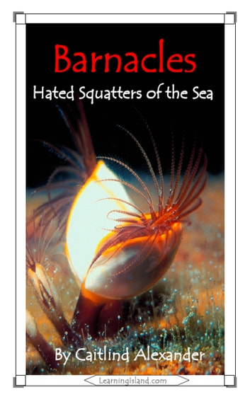 Barnacles: Hated Squatters of the Sea ebook by Caitlind L. Alexander