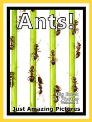 Just Ant Colony Photos! Big Book of Photographs & Pictures of Ants and Ant Colonies, Vol. 1 ebook by Big Book of Photos
