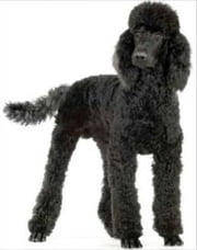 How to Train a Poodle ebook by Bernie Riley