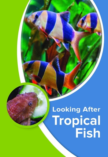 Looking After Tropical Fish ebook by Kevin Wilson